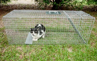 Cat trapped in a humane non lethal animal trap