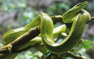 snake-861713_1920