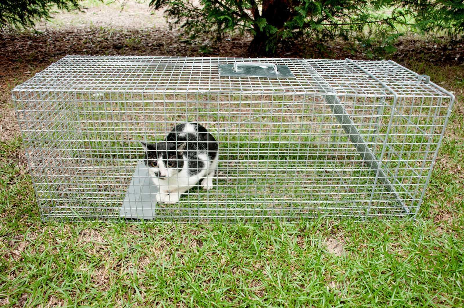 לכידת חתולים ובע