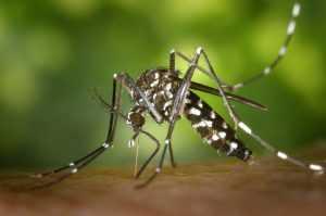 מה עושים כשסובלים ממכת יתושים?