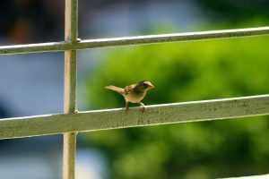 ציפור קטנה על סורג